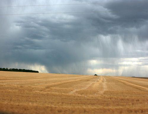 Lietus kavē graudaugu ražas novākšanu; tamdēļ var ciest arī kvalitāte