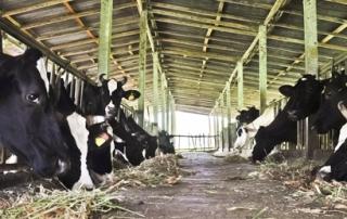 Apdrošinātājs: Pēdējos gados ir augusi lauku uzņēmēju interese par apdrošināšanu - VOKA.LV