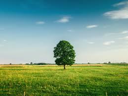 Atvieglo iespējas mežā ierīkot lauksaimniecības zemes - VOKA.LV